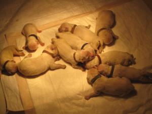 sadie pups day 2 013