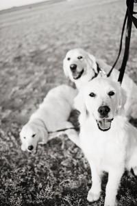 dogs_40b&w